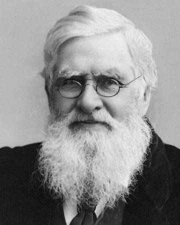Naturalista, antropólogo y explorador Alfred Russel Wallace